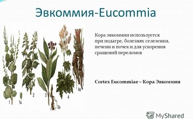 Травы при подагре и повышенной мочевой кислоте: эффективные сборы и отвары
