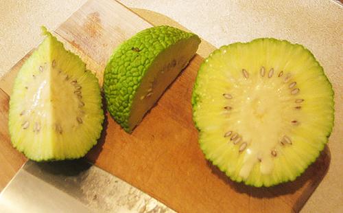 Адамово яблоко для суставов: рецепты настойки и мази, отзывы о применении маклюры