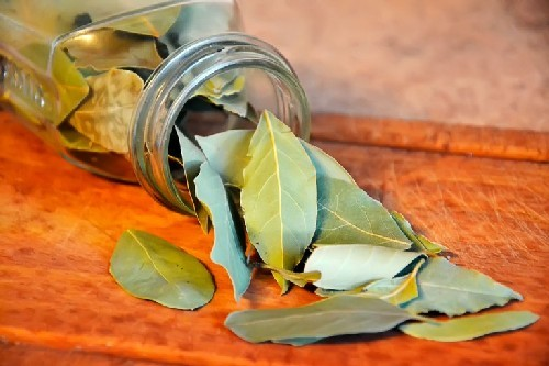 Лавровый лист для суставов: рецепты настойки и отвара, отзывы о лечении