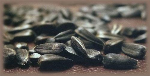 Можно ли семечки при подагре: как кушать семена тыквы и подсолнуха
