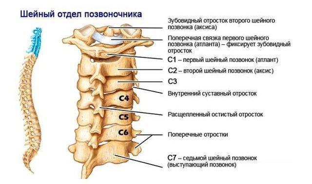 Мазь при остеохондрозе шейного отдела позвоночника: список лучших